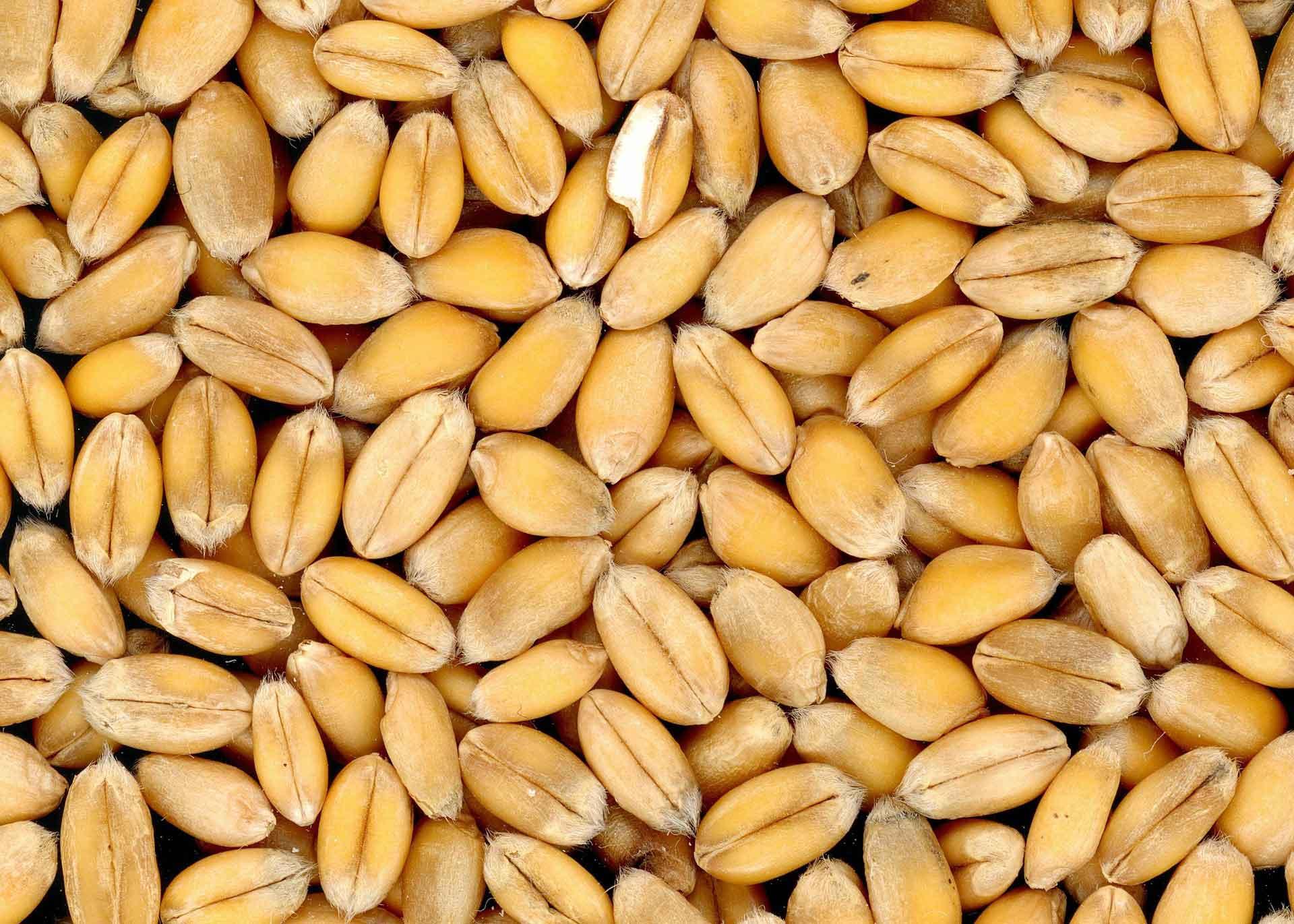 Benne à céréales
